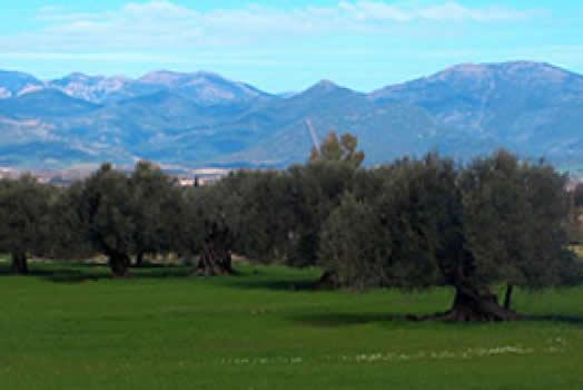 Villamassargia: S'Ortu Mannu